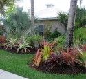 Tropical Landscaping Sarasota