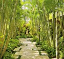 Tropical Landscaping Ideas For Backyard