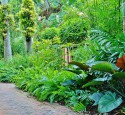Tropical American Landscaping