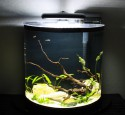 Marineland 20 Gallon Aquarium