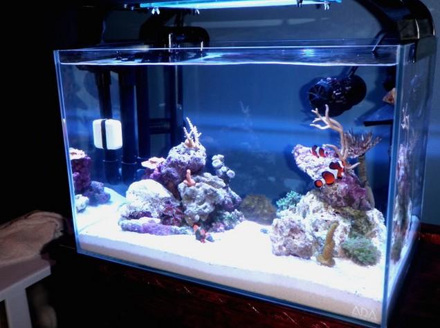 20 Gallon Rimless Aquarium