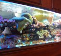 200 Gallon Reef Aquarium