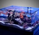 Edge Rimless Aquarium