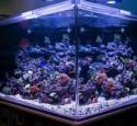 300 Gallon Aquarium Kit