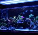 90 Gallon Rimless Aquarium
