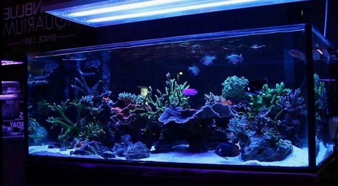 90 Gallon Rimless Aquarium