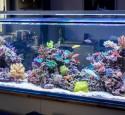 Large Rimless Aquarium