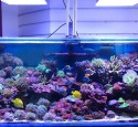 200 Gallon Aquarium Lighting