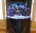 200 Gallon Oceanic Aquarium