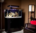 Rimless Aquarium Led