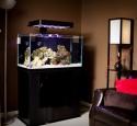 Rimless Aquarium Led