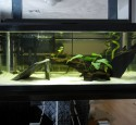 20 Gallon Aquarium Kits