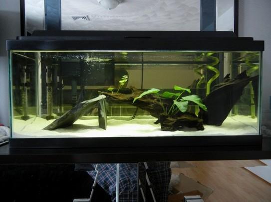 20 Gallon Aquarium Kits