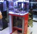 Rimless Aquarium Lighting