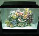 Cool 20 Gallon Long Aquarium