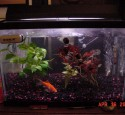 20 Gallon Aquarium Fish