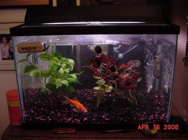 20 Gallon Aquarium Fish