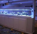Ideas For Rimless Aquarium