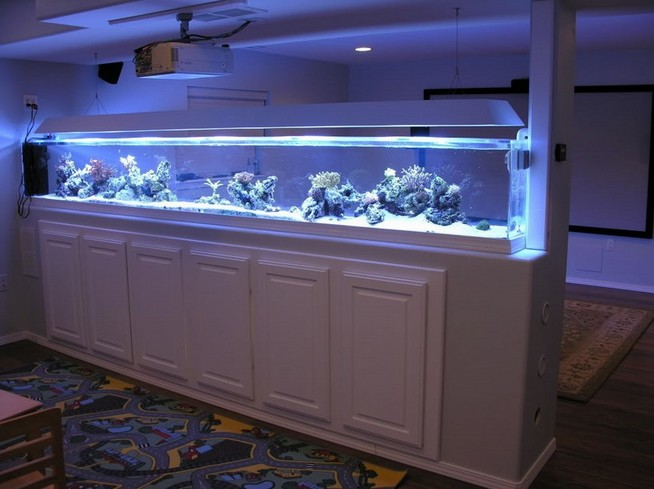 Ideas For Rimless Aquarium