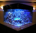 200 Gallon Aquarium Design