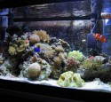 20 Gallon Reef Aquarium