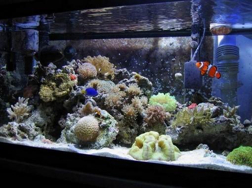 20 Gallon Reef Aquarium