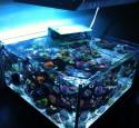 30 Gallon Rimless Aquarium