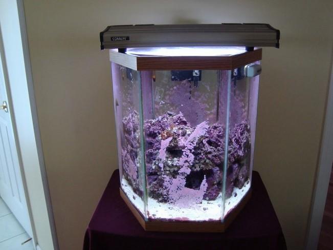 20 Gallon Hexagon Aquarium Hood