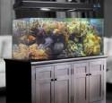 300 Gallon Hexagon Aquarium