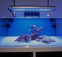 Rimless Aquarium Reef Ready