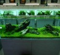 Quality Rimless Aquarium