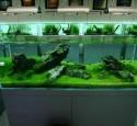 Quality Rimless Aquarium