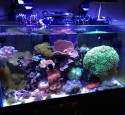 Oceanic Rimless Aquarium