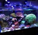 Oceanic Rimless Aquarium