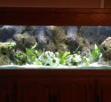 200 Gallon Long Aquarium