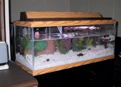 20 Gallon Long Aquarium Design