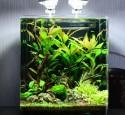Best Rimless Nano Aquarium