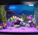 Grreat Choice 20 Gallon Aquarium