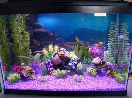 Grreat Choice 20 Gallon Aquarium