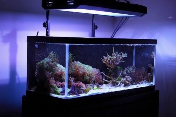 Best 20 Gallon Aquarium