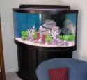 300 Gallon Oceanic Aquarium