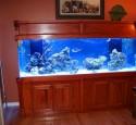 300 Gallon Saltwater Aquarium