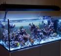 300 Gallon Rimless Aquarium