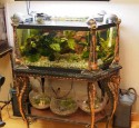 Antique Rimless Aquarium