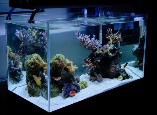 Rimless Marine Aquarium