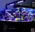 200 Gallon Rimless Aquarium