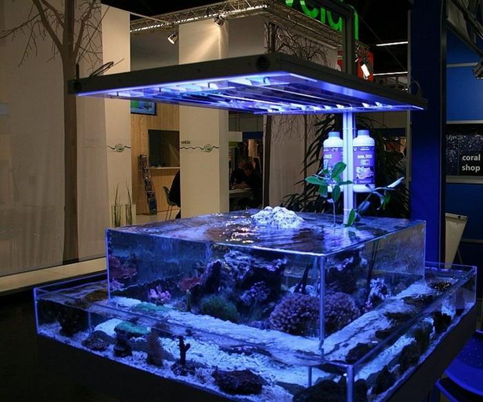 Design For Rimless Aquarium