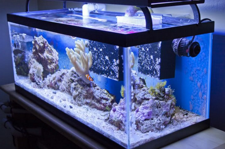 How To Buy 20 Gallon Long Aquarium