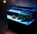 Japanese Rimless Aquarium
