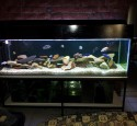200 Gallon Aquarium Spec